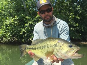 Large largemouth bass on the Shenandoah River.