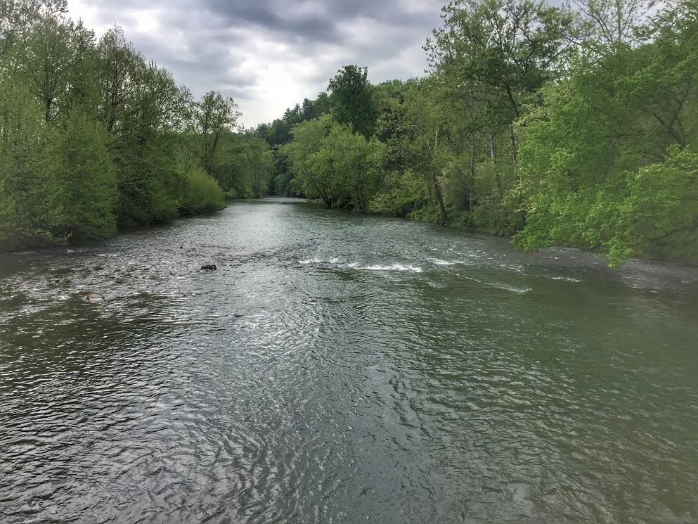 Cowpasture River, Bath county Virginia fly fishing