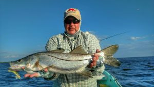 Beautiful snook from the Belize River. Belize River Lodge and Long Caye outpost.