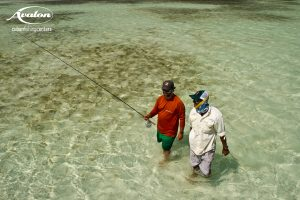 Angler and guide walking the flat while fishing Isla De Juventud cuba.
