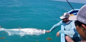 A 100+lbs tarpon being released in Ascenion Bay Mexico.