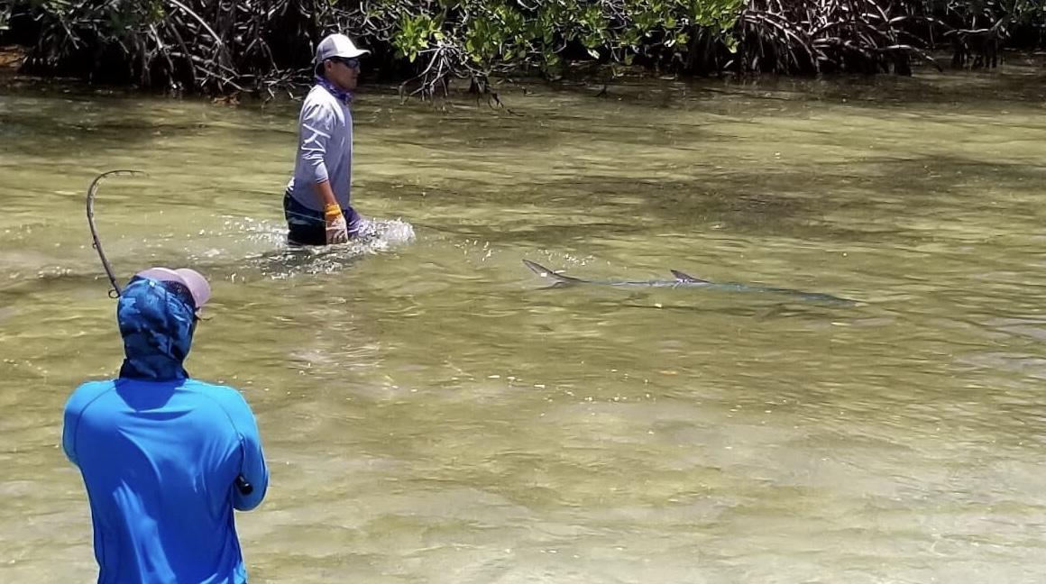 An angler and guide landing a tarpon while fishing La Pescadora Lodge in Mexico's Yucatan Peninsula.