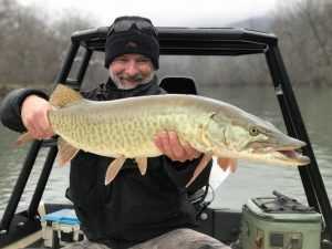A musky from the Shenandoah river caught new years day 2021.