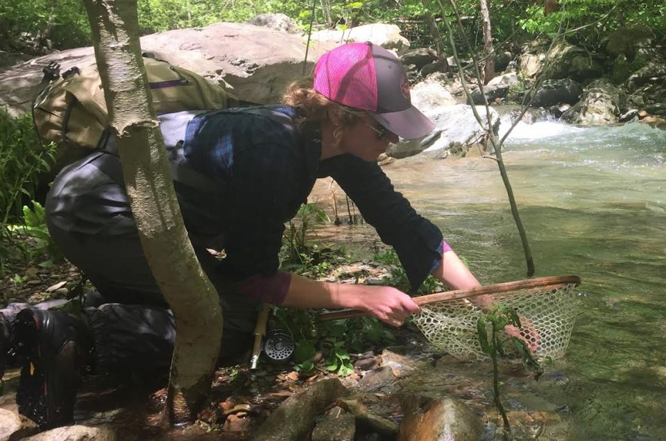 anlger releasing a brook trout in Virginia.