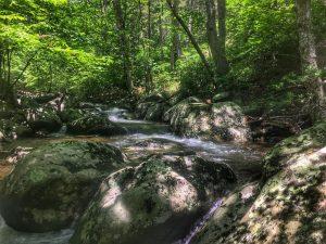 the Hazel river. Brookies