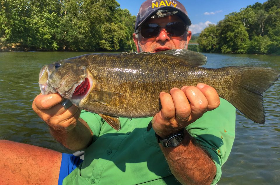 Shenandoah river, Virginia smallmouth bass.