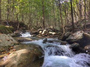 A beautiful brook trout stream in the Shenandoah National Park.