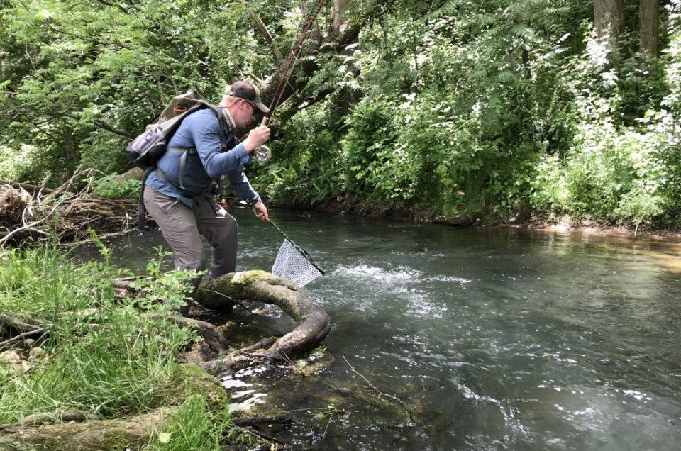 Angler netting a fish while fishing Beaver Creek in Ottobine Va, Fly fishing in Virginia.